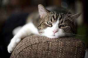 Comment Savoir Si Son Catalyseur Est Bouché : comment savoir si mon chat est malade m decine g n rale du chat sant chats ~ Gottalentnigeria.com Avis de Voitures