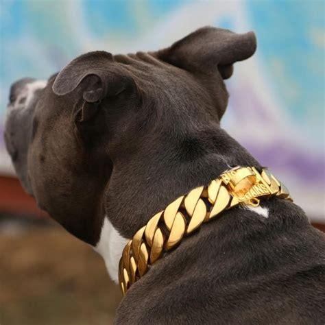 Big Gold Chain Dog Collars