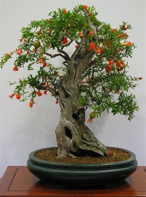 artificial bonsai tree los mejores árboles para bonsais