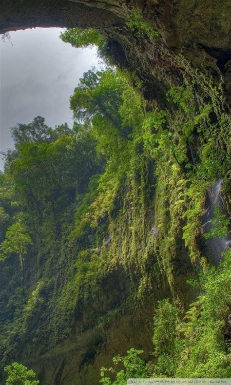 rain forest  hd desktop wallpaper   ultra hd tv