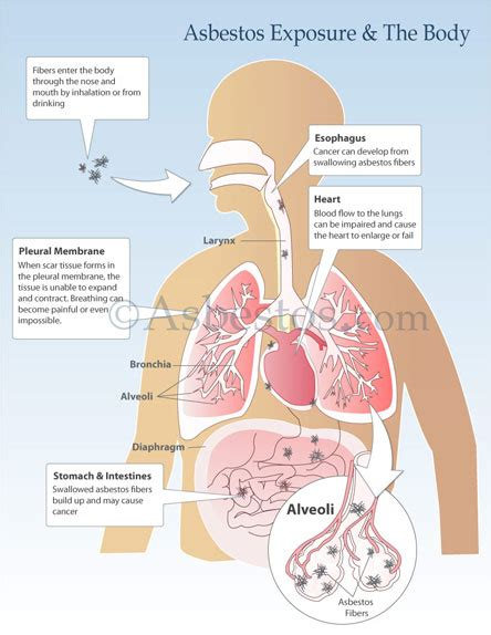 updates  nutrition  functional medicine maurizio