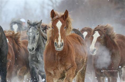heumenge pferd berechnen beim pferd das idealgewicht berechnen pferdewissen magengeschw