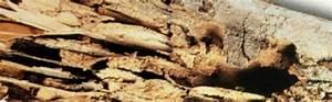 Produit Contre Les Termites : traitement termites traitement contre les termites anti termites ~ Melissatoandfro.com Idées de Décoration