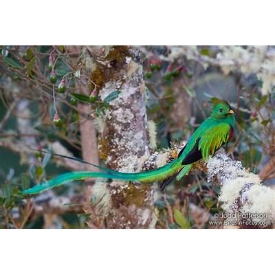 COSTA RICAA Birder´s Blog