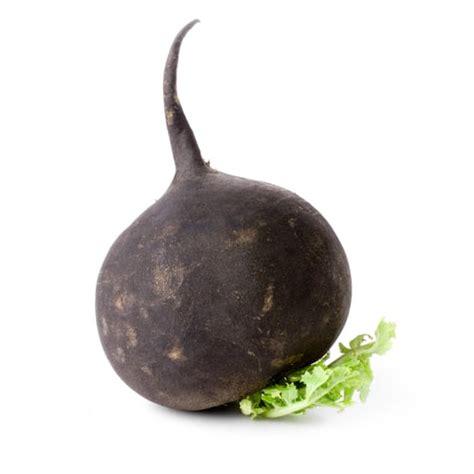 cuisine radis noir le radis noir dans la cuisine du jardin cuisinedujardin com