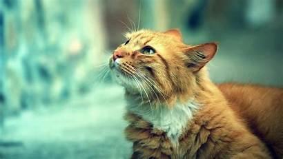 Cat Wallpapers 4k Windows Gatos Backgrounds Animals