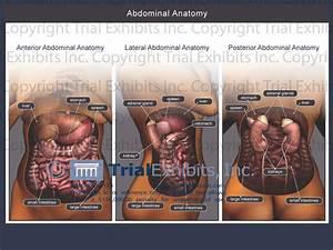 Human Anatomy Woman Abdomen