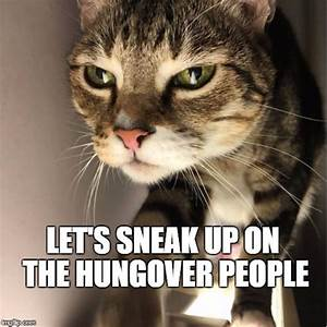 sneaky cat meme - 28 images - sneaky little cat by one ...