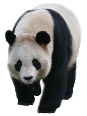panda transparent background image  png images