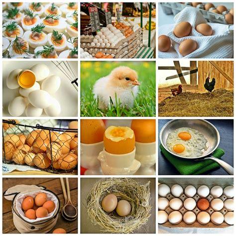 illustration collage egg chicken chicks nest