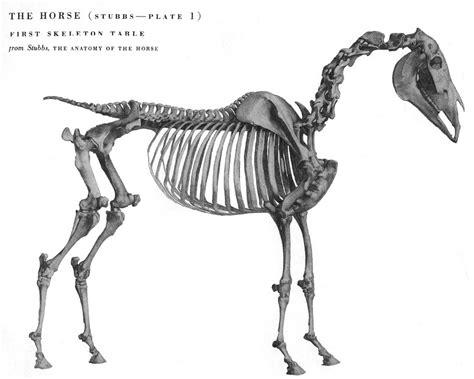horse anatomy anatomy   pinterest horse