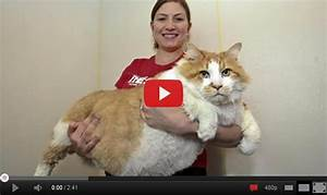 Fattest Cat in the World | I can't believe! This is ...