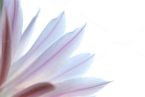 Background Warna Soft Pink » Designtube