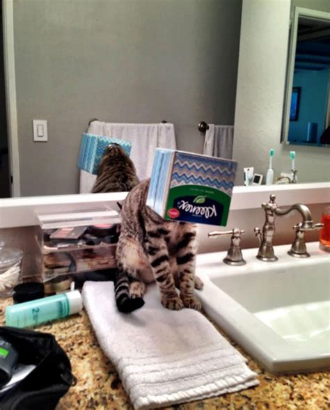 cats  instantly regretted  poor life choices