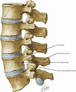 Back and Spinal Cord | Radiology Key