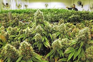 Pa. medical marijuana bill may face new roadblocks - The ...