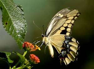 Unique Wallpaper  Exotic Butterfly
