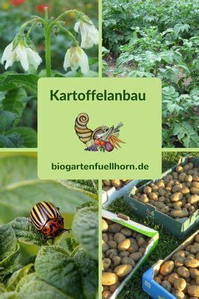 kartoffeln wann pflanzen kartoffelanbau im biogarten garten ortwinkler weg