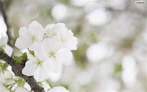 White Flowers Wallpapers - WallpaperSafari