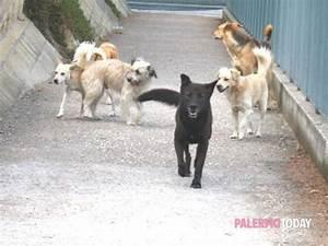 Università, cani randagi con il collare blu per tranquillizzare gli studenti