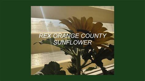 Sunflower // Rex Orange County (lyrics)