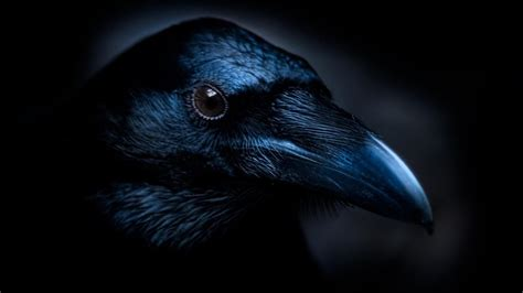 "What Are The Main Themes Of Edgar Allan Poe's Poem ""the Raven""? Referencecom"