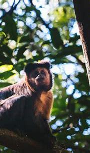 Monkeyland KZN opening in September!   Jukani Wildlife ...