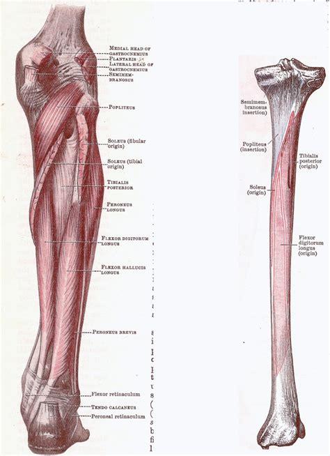 tuberositas tibiae schienbeinplateau anatomie und