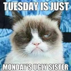 grumpy cat monday monday is tuesdays motivation