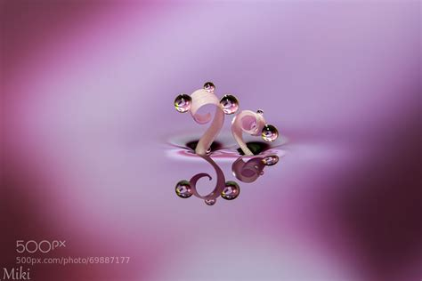 breathtaking macro images  photographer miki asai