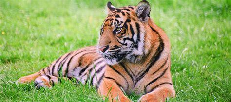 tiger natural gas cheney brothers florida food distributor