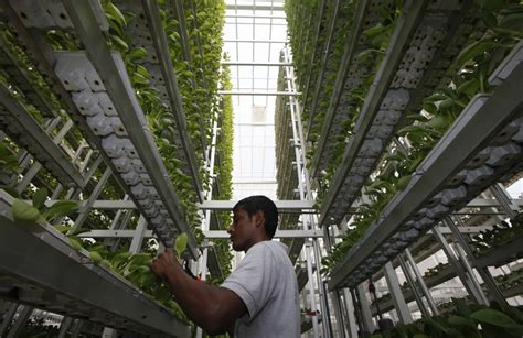 sky urban vertical farming system wins  index award mold designing  future  food