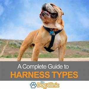 Types Of Dog Harness  A Complete Guide To The Pros  U0026 Cons