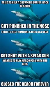 funny sharks - Dump A Day