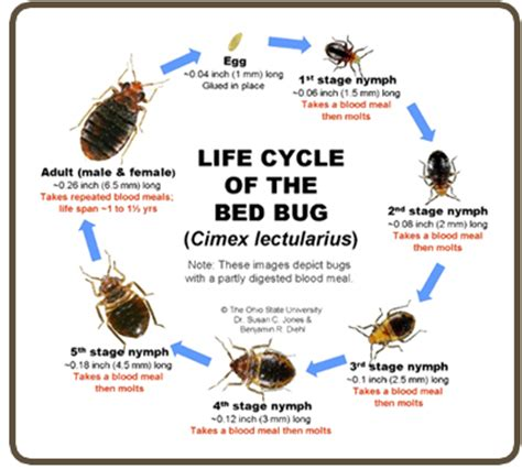 thermal heat bed bug busters virginia  house heat