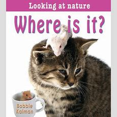 Where Is It? 9780778733416 Bobbie Kalman Paperback  Bmi Educational Services