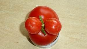 Beste Zeit Zum Tomaten Pflanzen : tomaten pflegen tomaten ausgeizen pflegen seitentriebe ~ Lizthompson.info Haus und Dekorationen