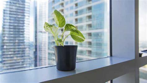 plantes de bureau mettre des plantes vertes dans bureau le paysagiste