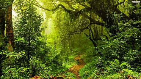 clean india green vrindavan forest mural mystical