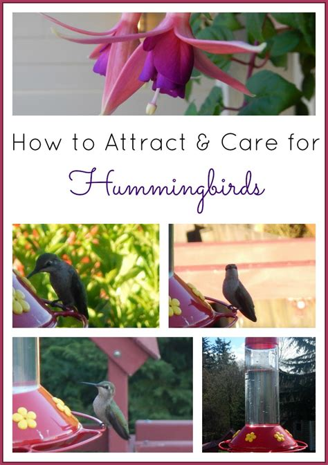 how to attract care for hummingbirds includes homemade