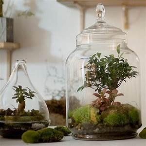 Acheter Terrarium Plante : un terrarium pour apporter une touche green votre int rieur marie claire ~ Teatrodelosmanantiales.com Idées de Décoration