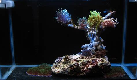 what s the best nano aquascape you ve seen general discussion nano reef community