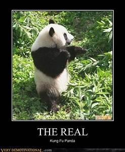 Panda Bear Quotes And Sayings QuotesGram