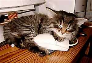 humor animals pets news, Funny Sleeping Photo archive
