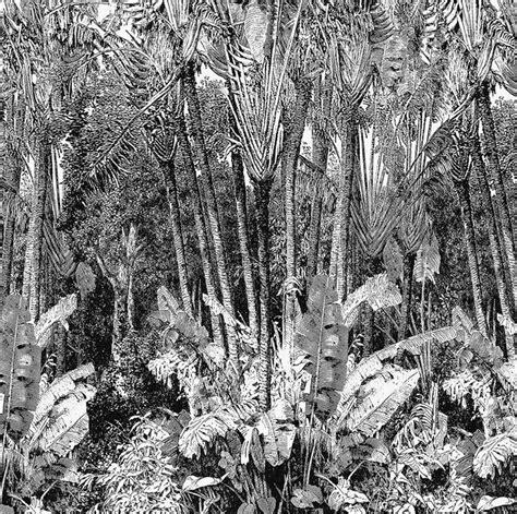 papier peint panoramique arbre du voyageur papiers