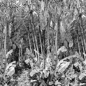 Papier Peint Arbre Noir Et Blanc : papier peint panoramique arbre du voyageur papiers peints par diteurs casamance le boudoir ~ Nature-et-papiers.com Idées de Décoration
