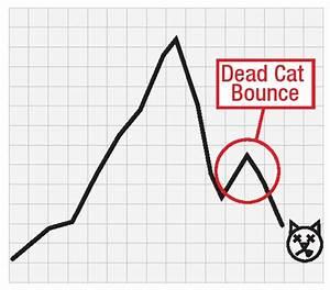Mi Az A Dead Cat Bounce