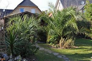 Palmen Für Den Garten : palmen und co ein hauch von fr hling ~ Sanjose-hotels-ca.com Haus und Dekorationen