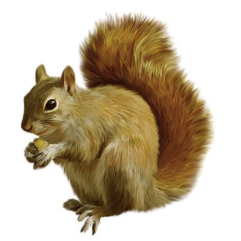 clipart png clipart png fundo transparente de esquilos imagens para