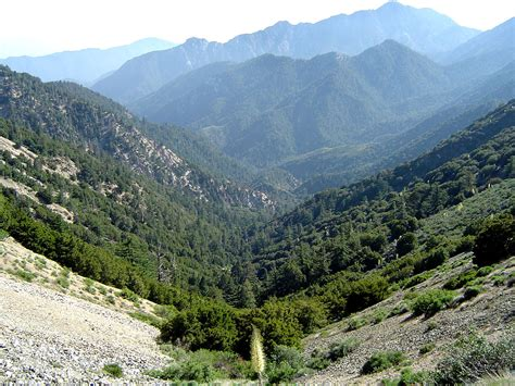 California montane chaparral and woodlands - Wikipedia